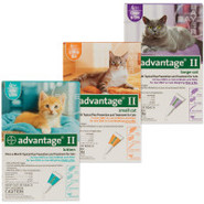 Advantage II Cat - 4 Pack