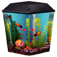 Top Fin&reg Aqua Scene 1 Gallon Desktop Aquarium S