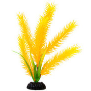 Top Fin Yellow Hair Plant