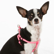 Top Paw X-Small Jeweled Comfort Wrap Dog Harness